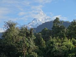 A view of Machhapurchhre (Fish Tail Mountain) during the last morning of our trek
